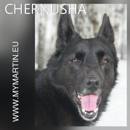 Chernusha