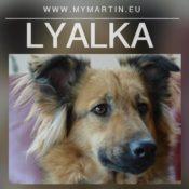 Lyalka