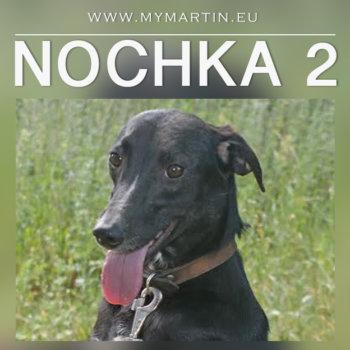 Nochka2
