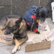 Wreed geld verdienen met pups en kittens