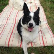 Zomer 2016 – Minifoster, een stapje extra voor MyMartin honden