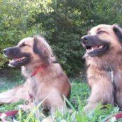 Chuk en Gektor