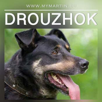 Drouzhok