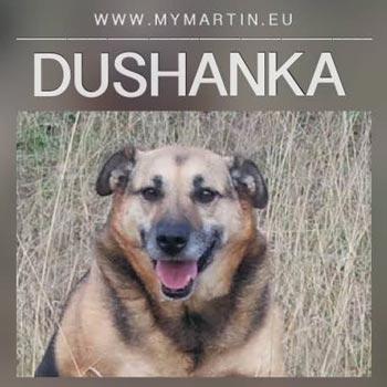 Dushanka