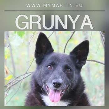 Grunya