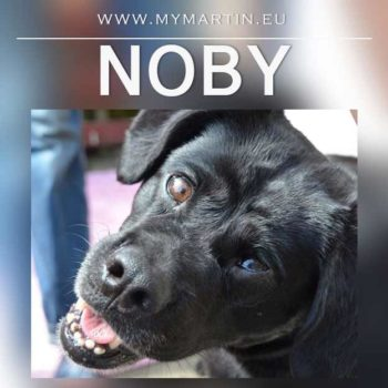 Noby
