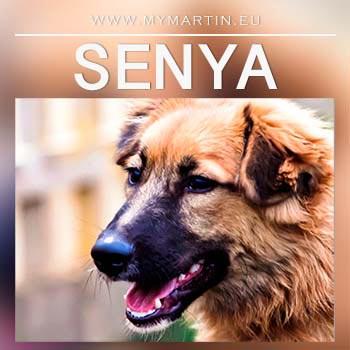 Senya