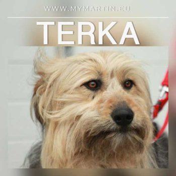 Terka
