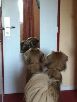 Chuk en Gektor voor de spiegel