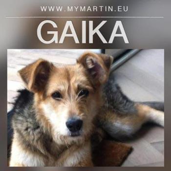 Gaika