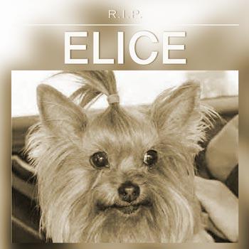 Liesje (Elice)