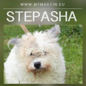 Stepasha