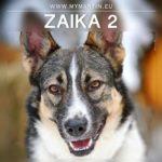 Zaika 2