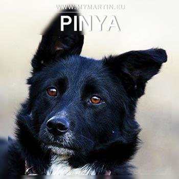 Pinya