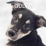 Gulya