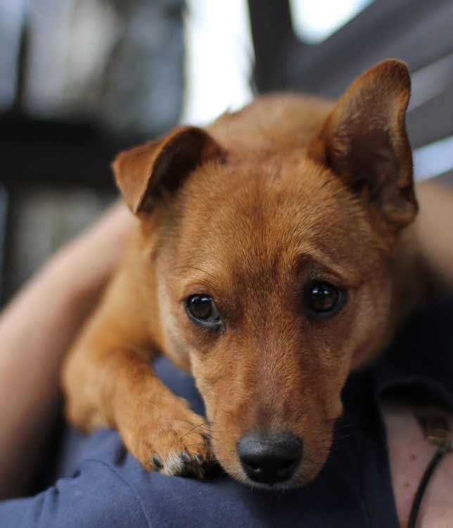 Patrick Is Een Zeer Jonge Hond Van Nog Geen Jaar Oud Hij Mix Kleinere Honden En Gevonden Bij Pompstation De Medewerkers Zag Dat