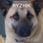 Ryzhik