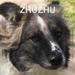 Zhuzhu