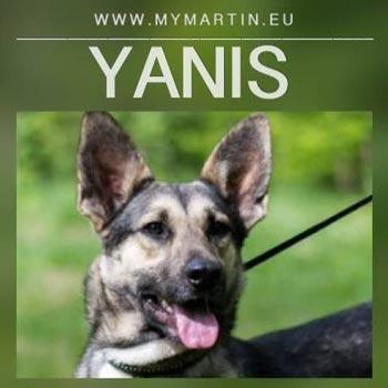 Yanis