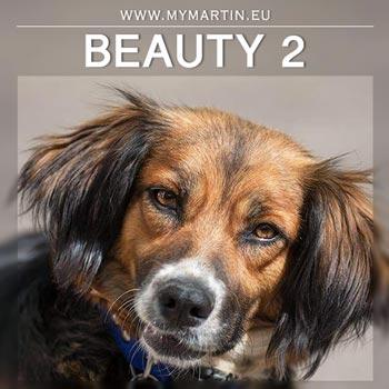 Beauty 2