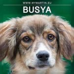 Busya