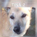 Tina 2
