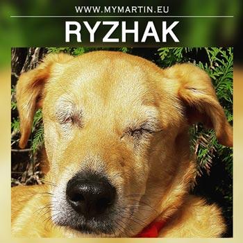 Ryzhak