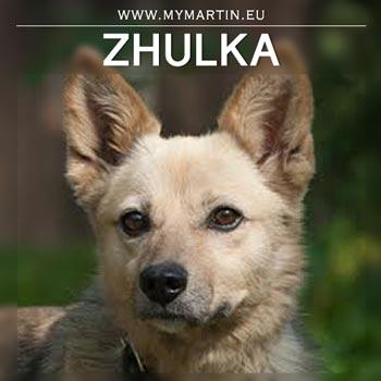 Zhulka