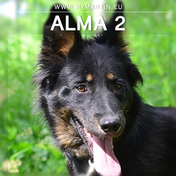 Alma 2