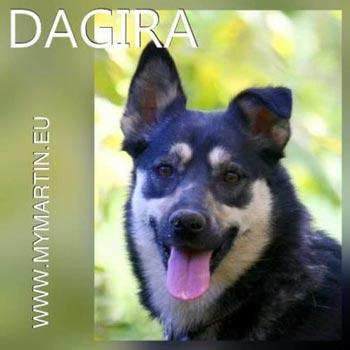 Dagira