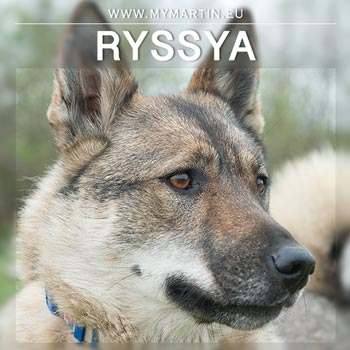 Ryssya