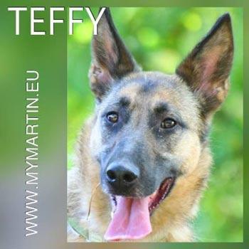 Teffy