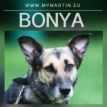 Bonya