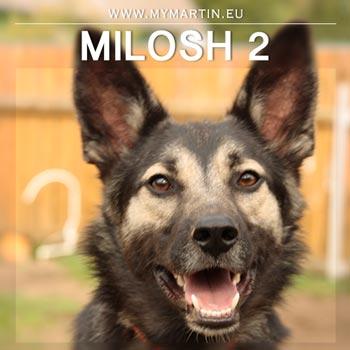 Milosh 2