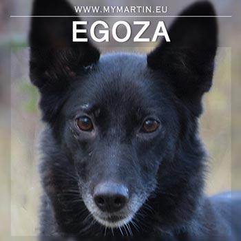 Egoza