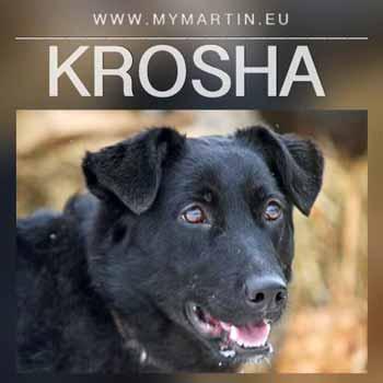Krosha