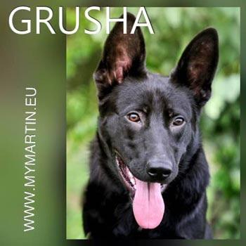 Grusha 2
