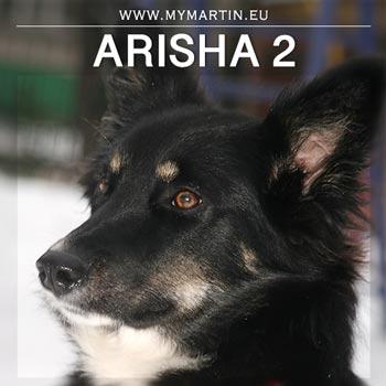 Arisha 2