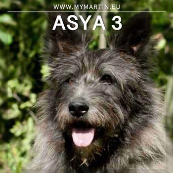 Asya 3