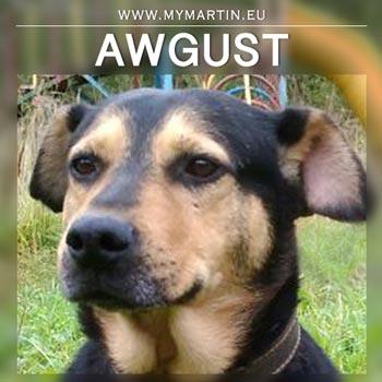 Awgust