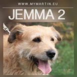 Jemma 2