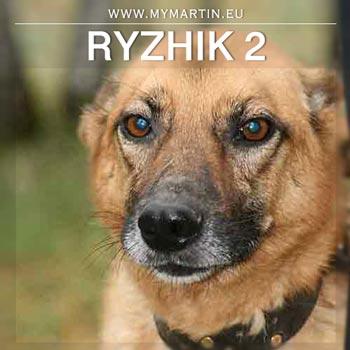 Ryzhik 2