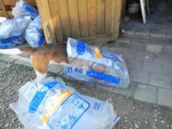 Cenaturio hondenvoer