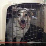 De reis van een MyMartin hond