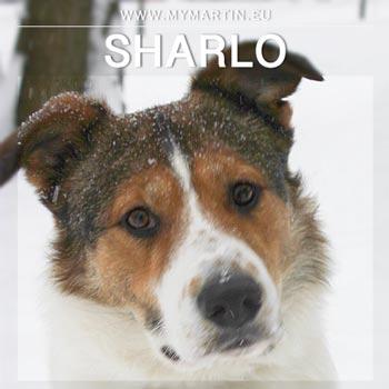 Sharlo
