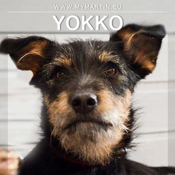 Yokko
