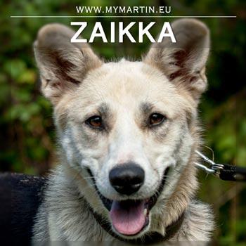 Zaikka