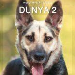 Dunya 2