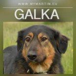 Galka