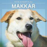 Makkar